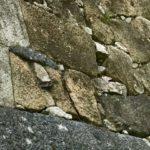 姫路城でタイムスリップ体験?石垣の組み方に注目!